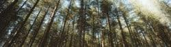 TreesPond