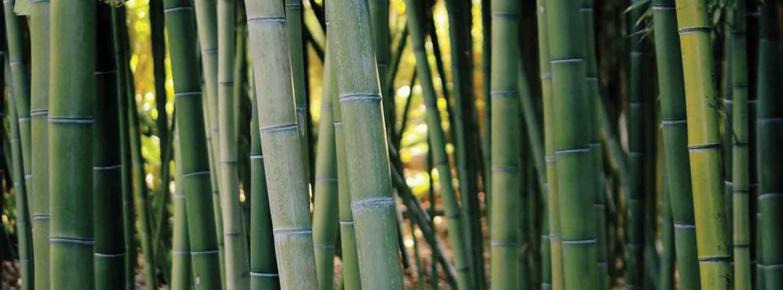 Bamboo versus Plastic