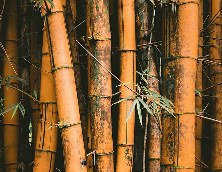 Bamboo plastic free alternative