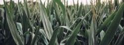 History of Bioenergy