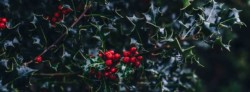 Plastic-free gift ideas and tips for Christmas