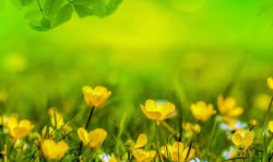 TRVST sustainable transport green field