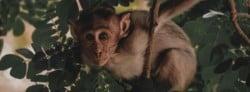 Monkey Quotes