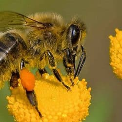 What to Plant to Help Save the Bees