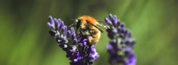 Why Are Bees Important to Biodiversity