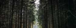How Planting Trees Can Mitigate Climate Change