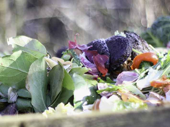 What can we compost?