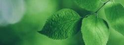 Giving back to a circular economy