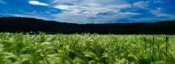 What is Biodynamic Farming