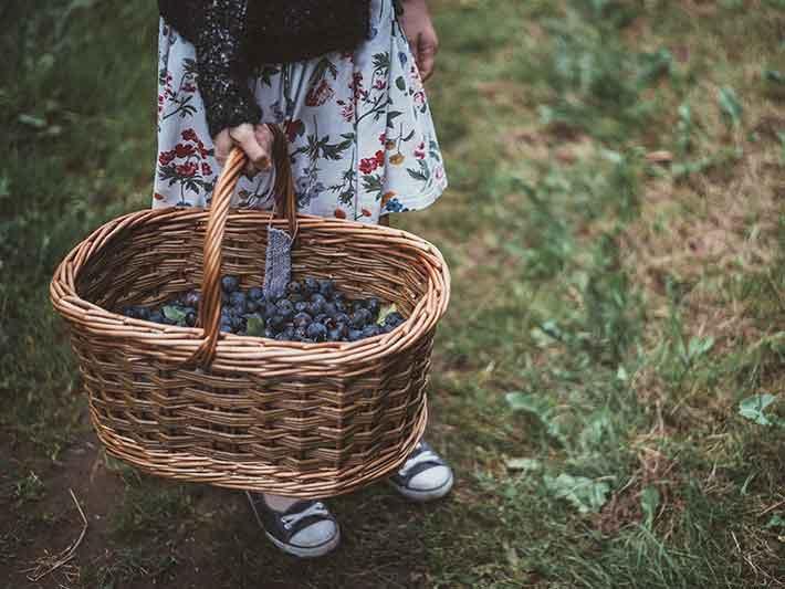 Fairtrade Blueberries