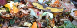 What Happens to Recycled Food Waste?