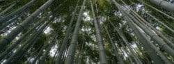 Best Bamboo Sunglasses