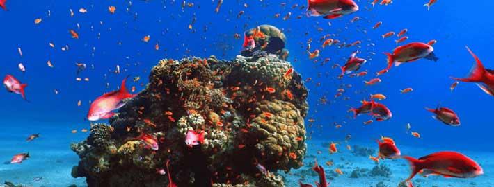 Representing the biodiversity of the sea