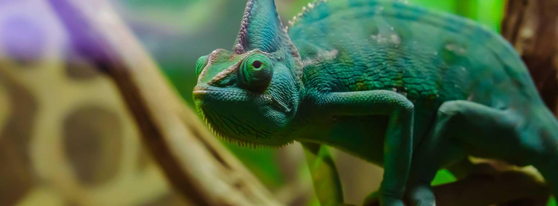 Biodiversity Facts