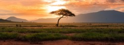 Africa's solarized digitalization agenda