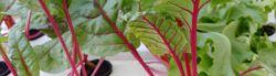 Environmental Benefits of Hydroponics