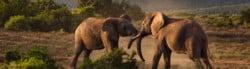 Preserving Species Under Threat
